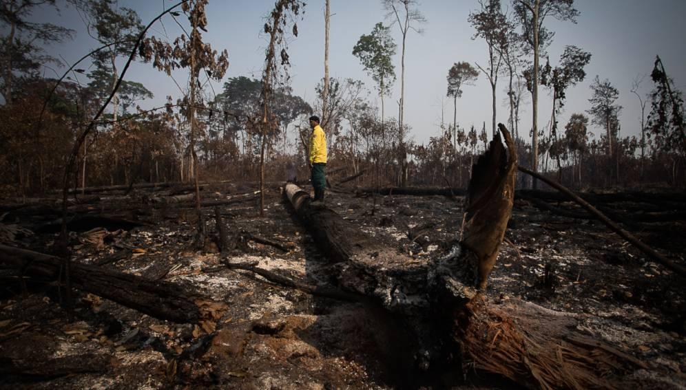 Degradación en la Amazonia es mayor que la deforestación – RAISG